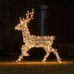 Projet Ephad - Noël 2020 - Visuel Renne - V1 du 25 11 2020